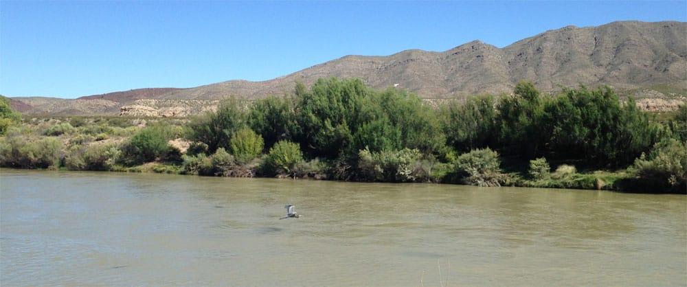 blue heron on the Rio Grande