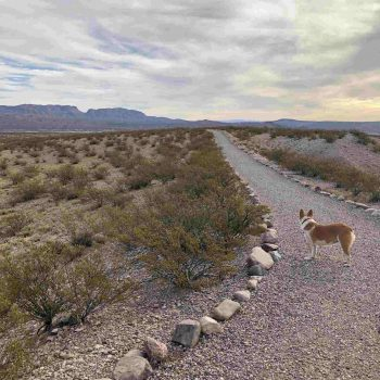 Trail by Elephant Butte Lake — Hot Springs Landing to South Monticello campground