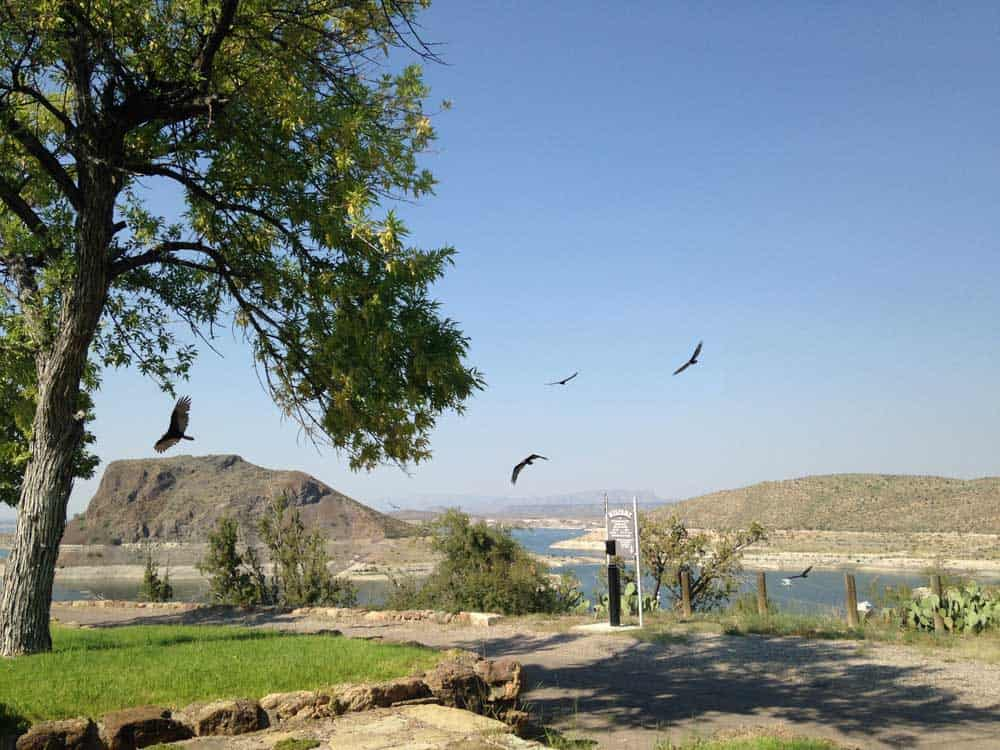 turkey vultures at Winding Roads Park