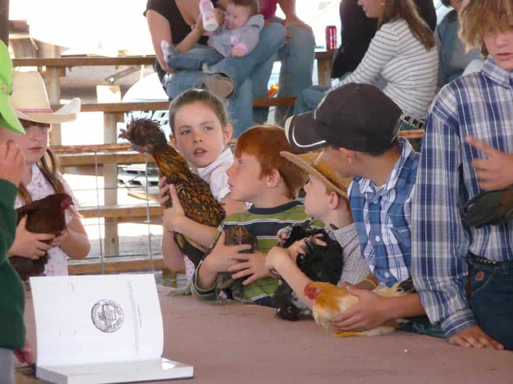 Sierra County Fair - chickens, pigs, steer, calves, vegetables, flowers, art