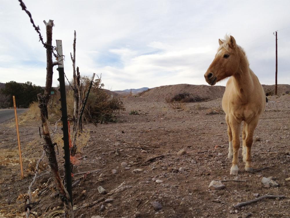 Horse in Las Placitas