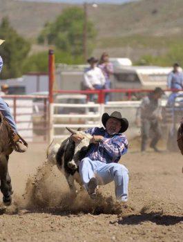 bulldogging at the Fiesta rodeo