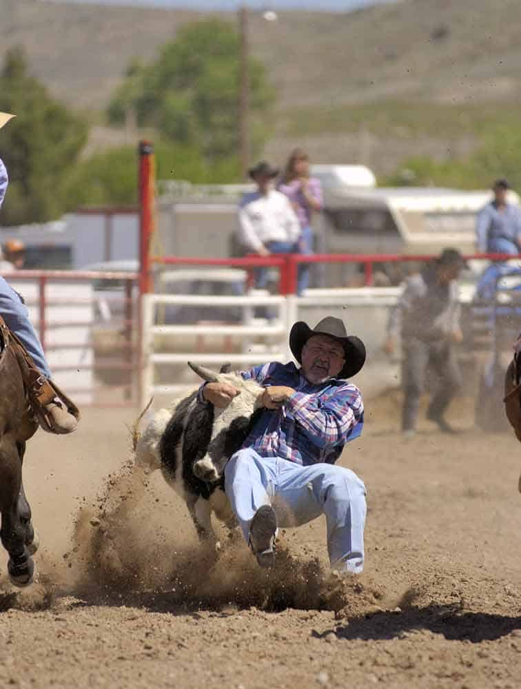 bulldogging at the Fiesta rodeo