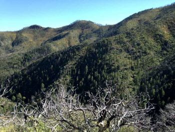 mountains in the Gila Wilderness, looking east from Emory Pass