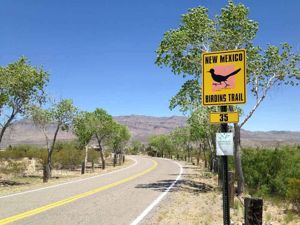 prime birding at Caballo Lake State Park