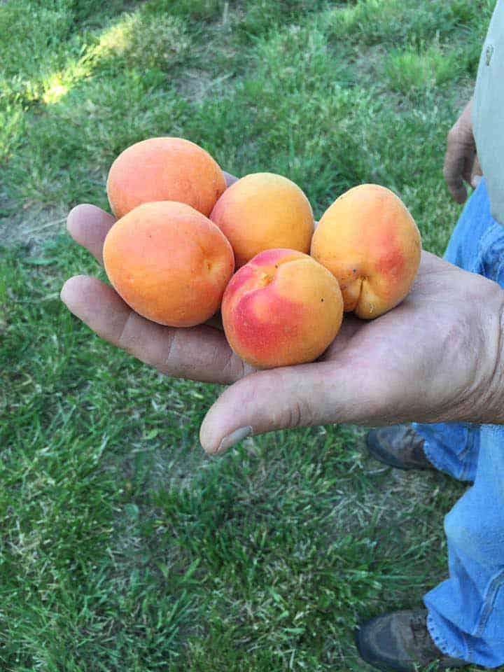 Sierra County Farmers Market fresh fruit