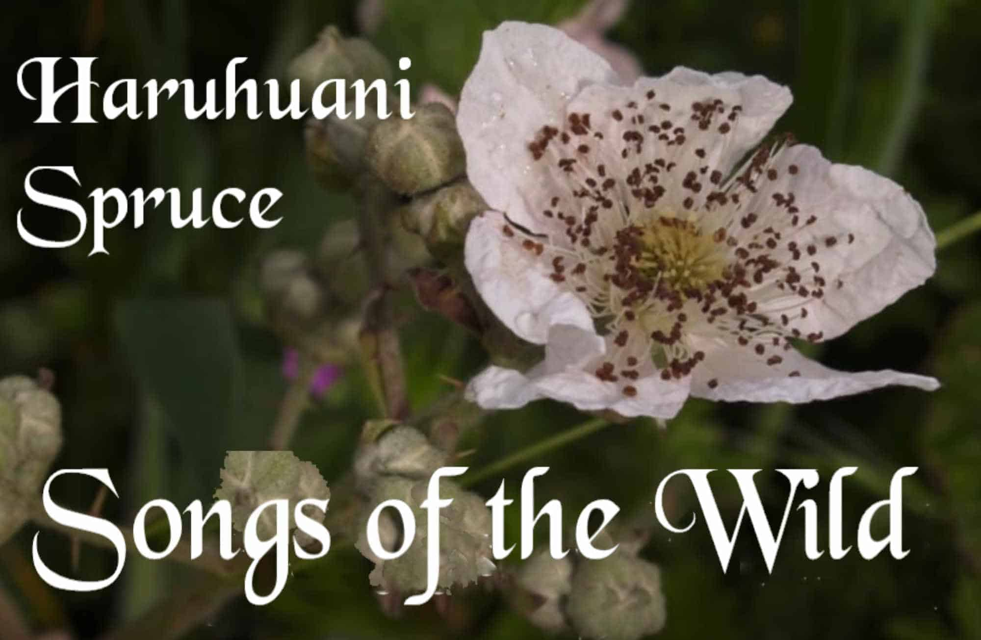 Songs of the Wild: Haruhuani Spruce at Black Cat Books